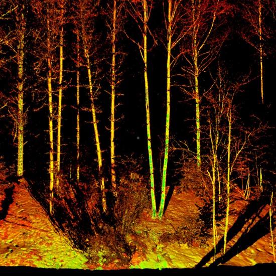Laser Scanning - forest inventory