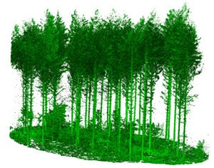 high-detail terrestrial laser scanning data presentation of forest